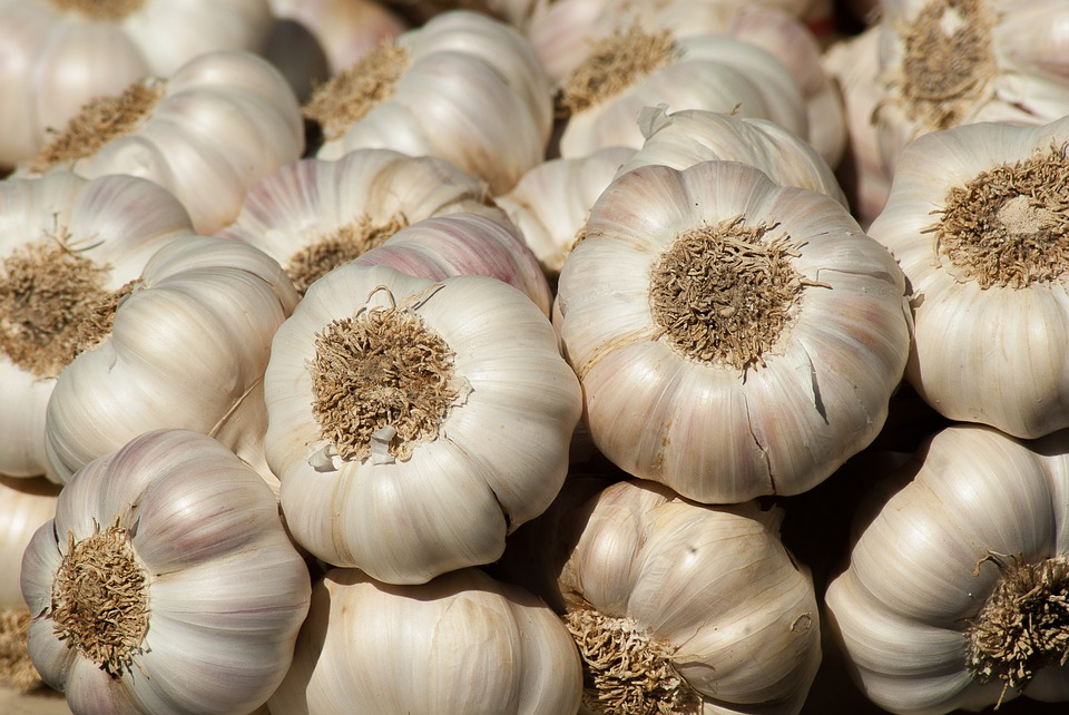 Bulbs of garlic in a pile